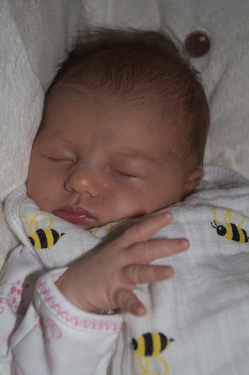 Sydney asleep - small