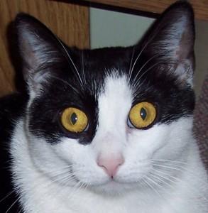Sabrina the cat