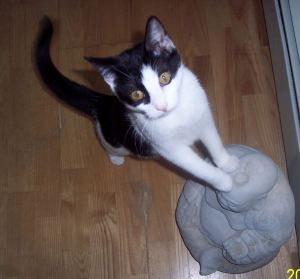 Sabby Cat on Stone Buddha Statue