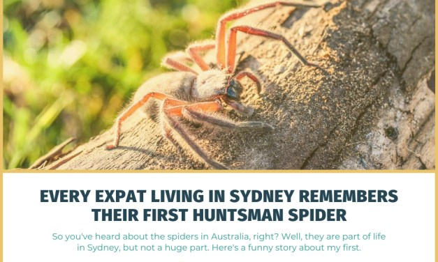 Every Expat Living in Sydney Remembers Their First Huntsman Spider