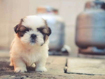 8 Questions to Ask When Adopting or Buying a Puppy