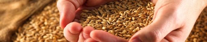 Armazenagem de grãos