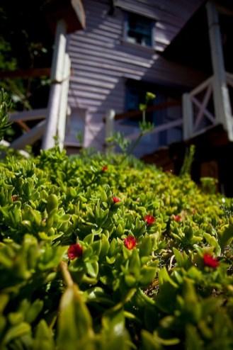 Plante chez popeye land à malte