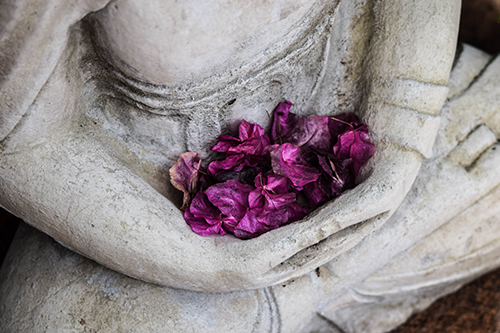 Meditation Fleurs _ Photo by Chris Ensey Unsplash