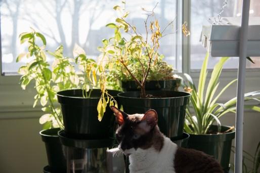 Jardinage urbain - Mise à jour, mars 2017