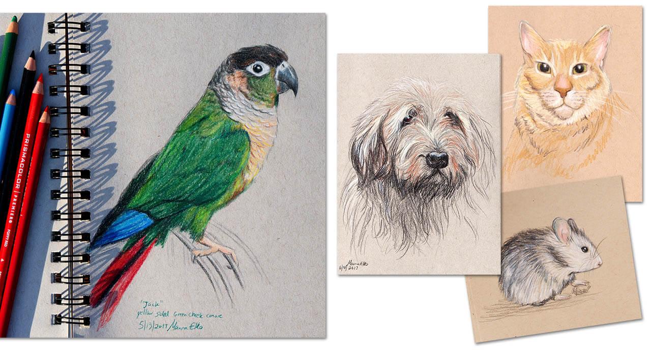 custom pet portraits colored pencil sketches