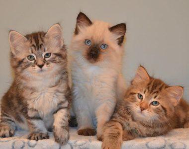 Kitten Album #2