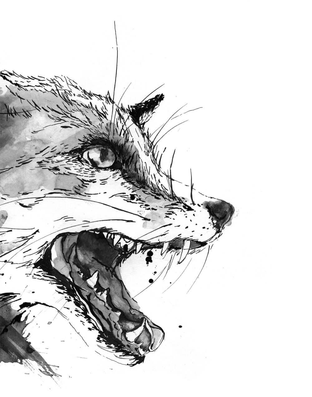 sylvia_stolan_foxes02