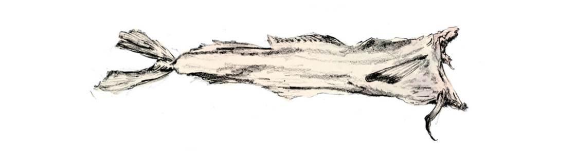 torrfisk.sylviastolan