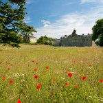 Poppies in Dan Pearsons William Morris Wild Flower Meadow Copyright Compton Verney Photograph by Stuart Thomas