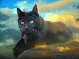 Bild von verstorbener Katze Julia