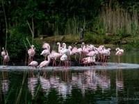 Inselbelagerung in rosa
