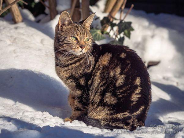 Katzenbild per Panoramafumkton optimiert