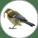 Early-bird-button