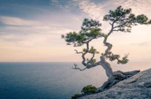 mindfulness-and-yoga-2