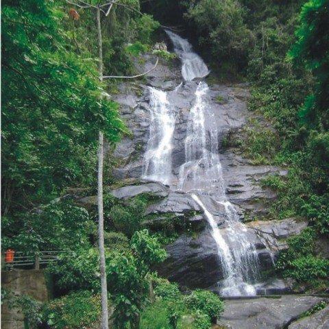 Tijuca Forest Tours  Rio de Janeiro Brazil  Synotrip