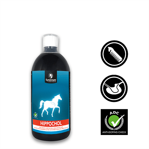 The benefits of giving your horse a break during COVID-19 lockdown! - Synovium Horse Health