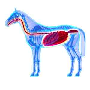 Ulcers in horses Gastrosafe