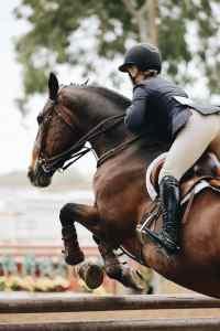 Magnesium for horses, Synovium Mgnium Horse Supplement