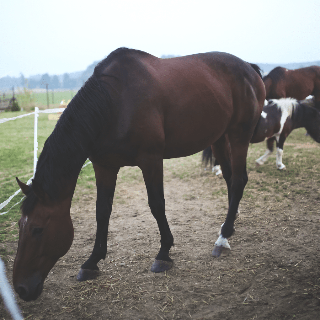 vitamin and mineral deficiencies in horses Synovium