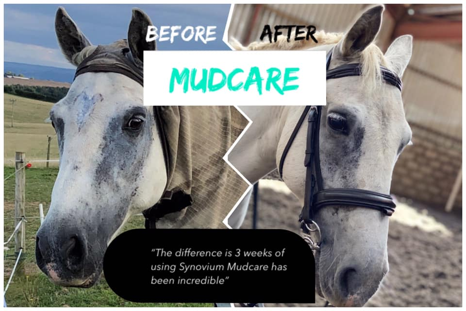 The truth about Mud Fever in horses - Synovium Horse Health