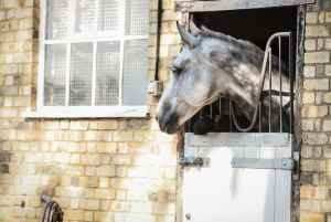 COPD in horses, equine asthma respiratory aid