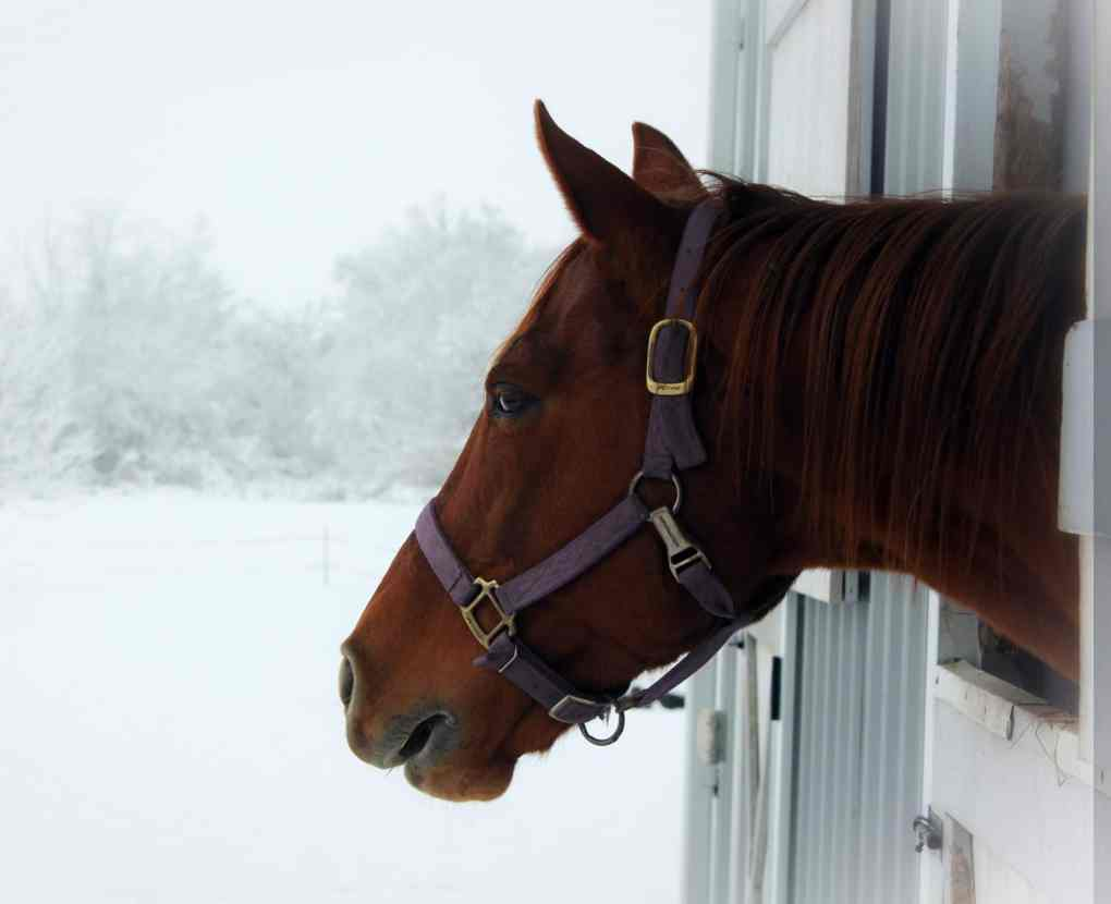 Top 10 Equine Winter Tips