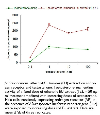 Synergy between testosterone and Eucommia ulmoide