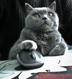 cat surfs the web