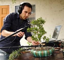 music-from-a-bonsai