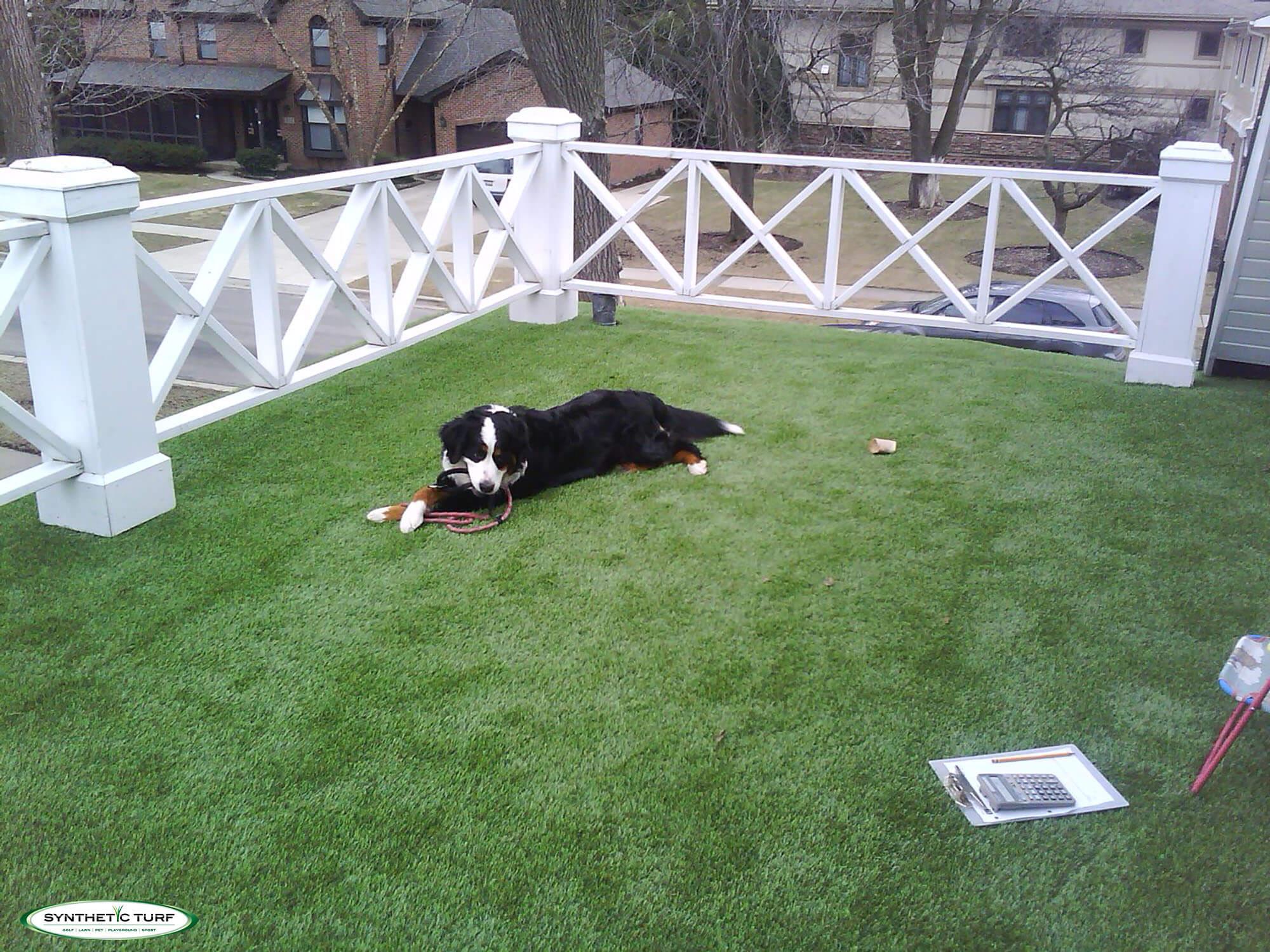 artificial turf dog runs pet turf synthetic turf of illinois