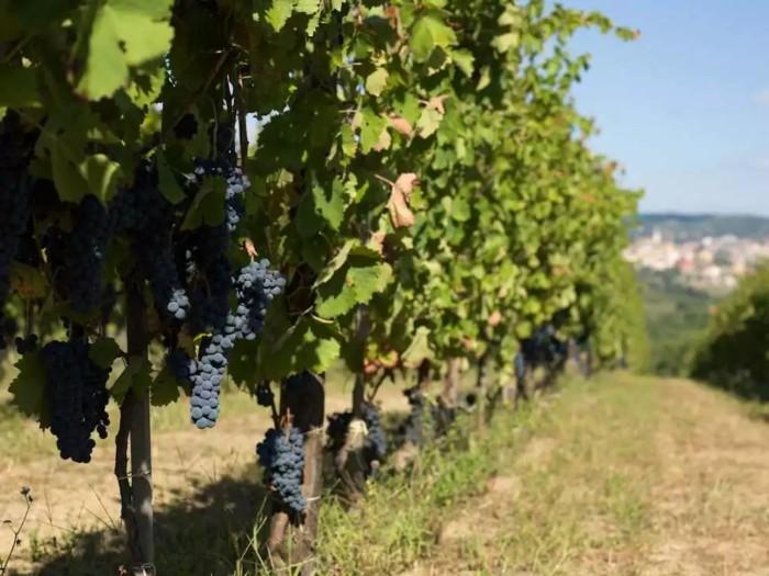 Exploring Campania Wines