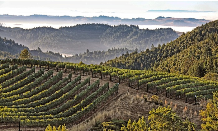 West of the West – Discovering the Wines of Fort Ross-Seaview AVA
