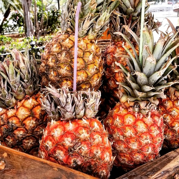 Fresh Pineapples on the Street Carts of Old Havana