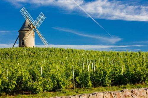Experience the Renaissance of Cru Beaujolais