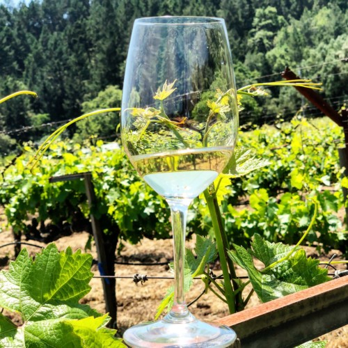 Your Guide to Napa Valley's Best Sauvignon Blancs