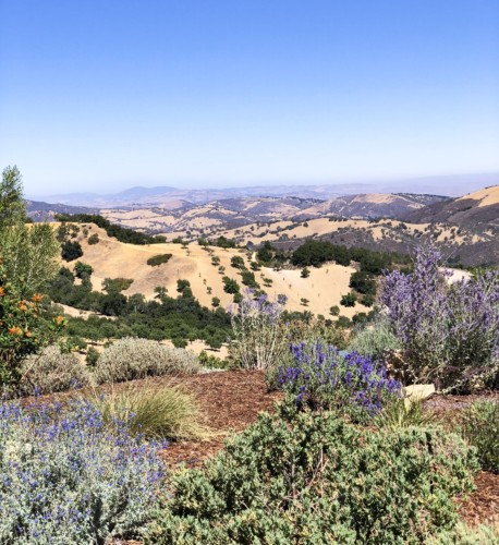 A New Generation of Winemakers in Paso Robles
