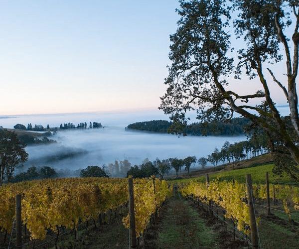 Maysara Winery – Iranian Immigrants Achieving The American Dream