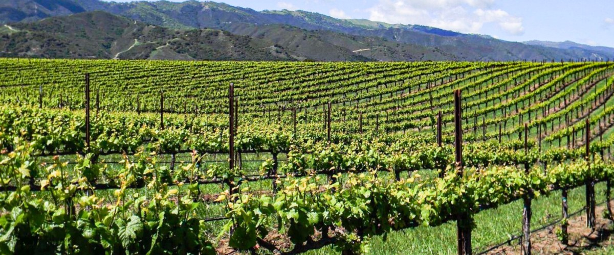 McIntyre Vineyards – Wines From The Santa Lucia Highlands