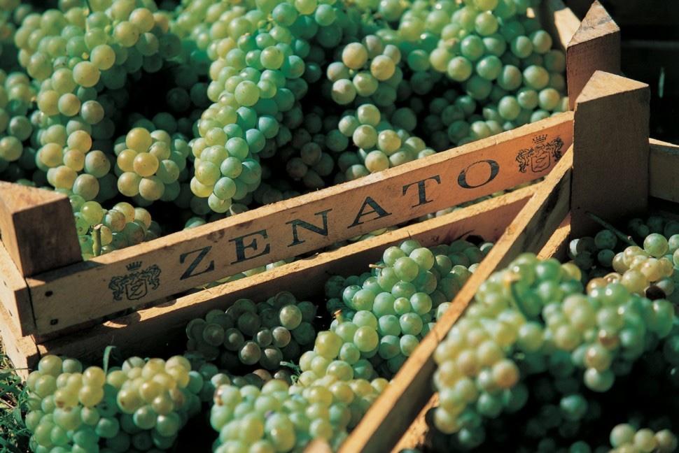 Zenato Wines