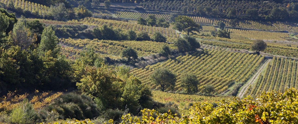 RASTEAU – Exploring The Gems Of This Southern Rhone Cru