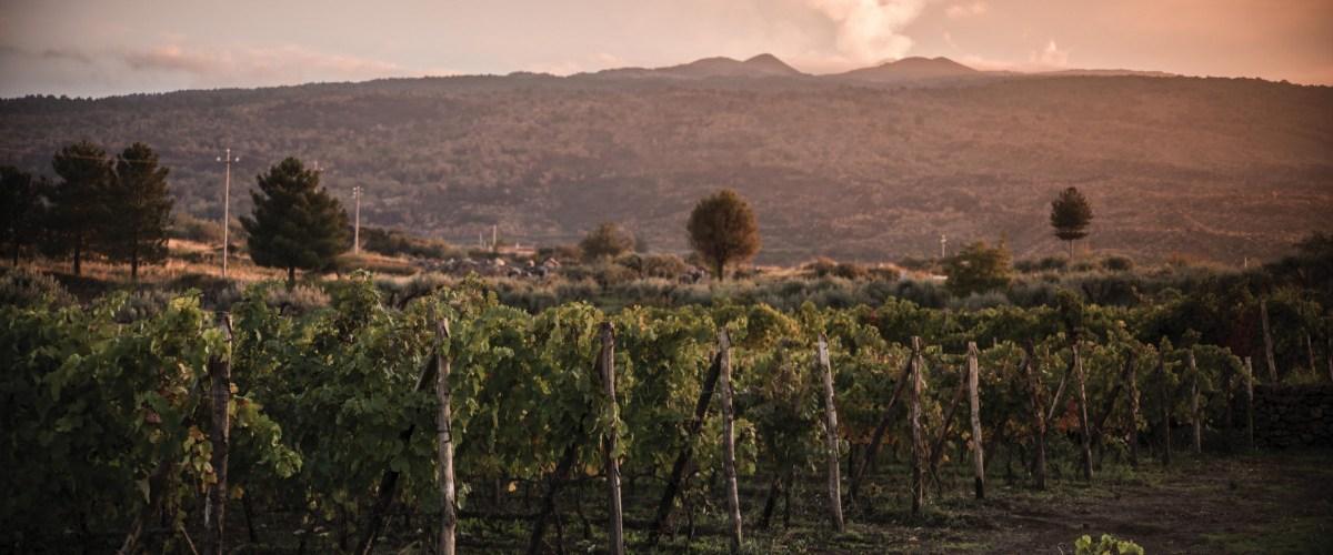 Tenuta Tascante – Introducing Four New Contrada Wines of Mount Etna