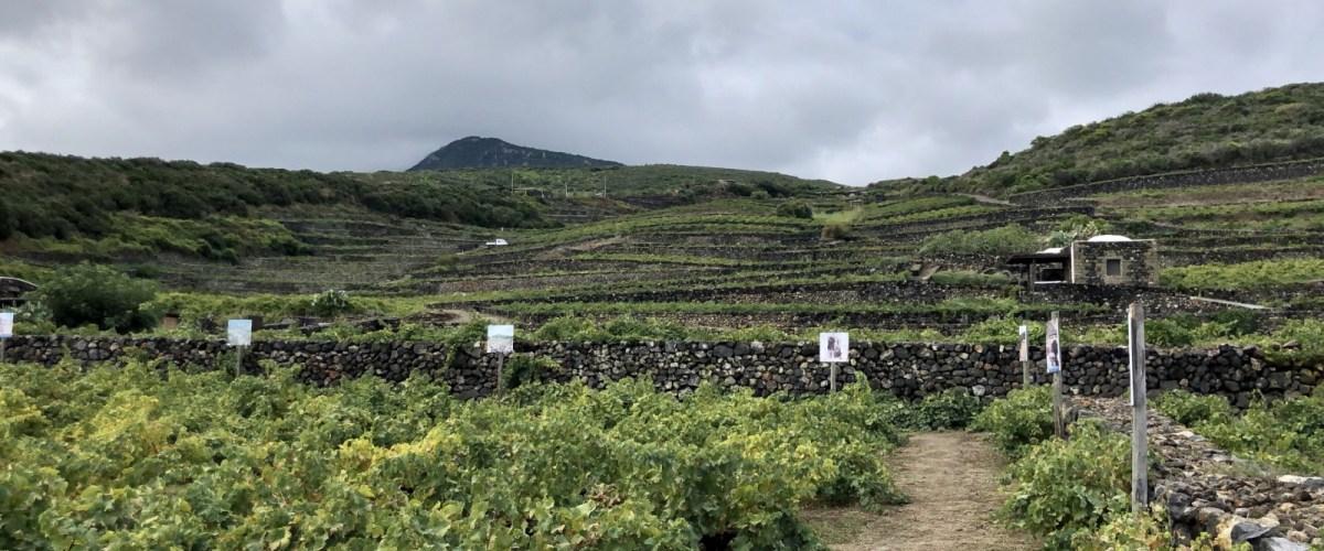 Discover Pantelleria With Donnafugata Wines – Sicily's Secret Island