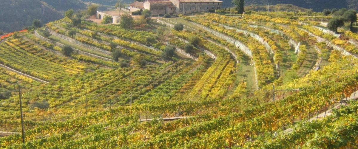 Valpolicella – Discovering Italy's Finest Wine Region