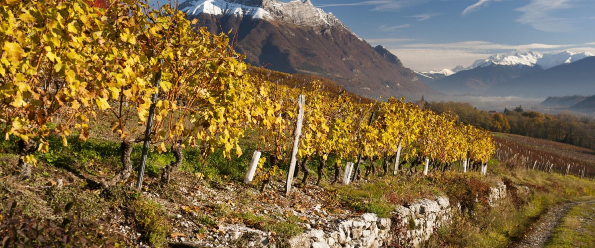 Savoie Wines and Tartiflette – Mountain Wines with Mountain Fare