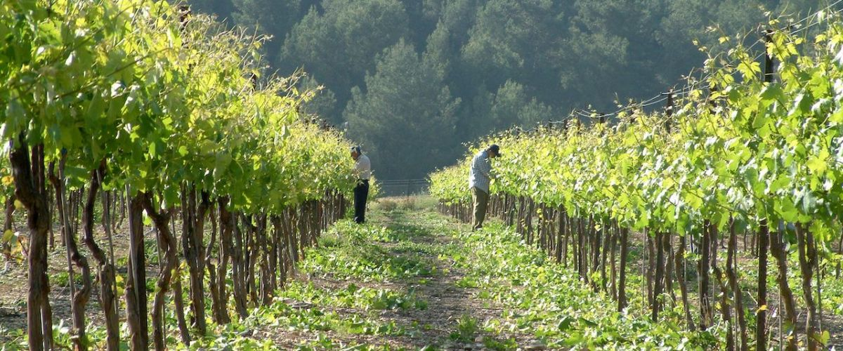 Off The Beaten Path – Two Wines From Israel's Galilee Appellation