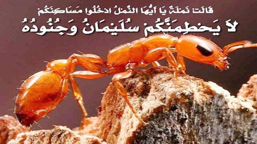 وادي النمل السوري: ضيعة ضايعة