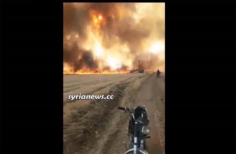 NATO terrorists burning Syrian wheat crops in Ras Al Ayn - Hasakah