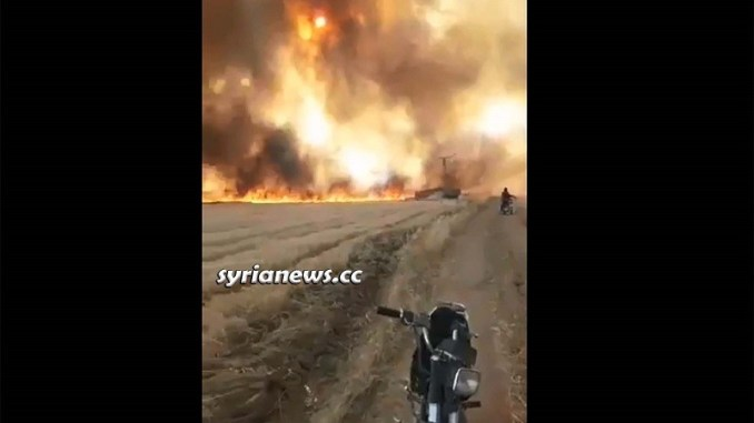 NATO terrorists burning Syrian wheat crops in Ras Al Ayn - Hasakah