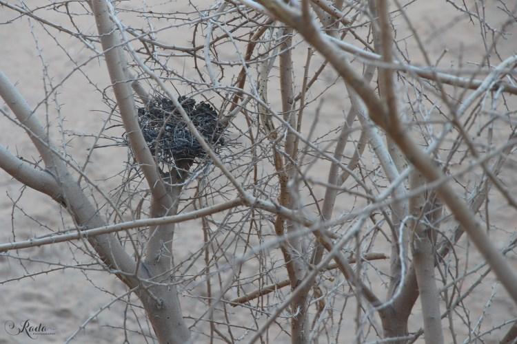 Het Lege Nest
